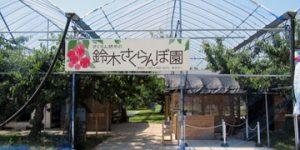 鈴木さくらんぼ園